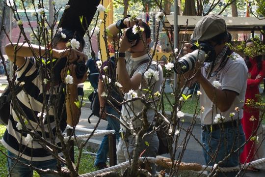 Các nhiếp ảnh gia ít khi bỏ qua những đóa hoa trắng tinh khôi, quý hiếm như thế này.