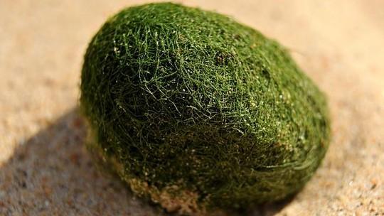 """Hàng trăm """"quả trứng kỳ lạ"""" dạt bờ biển Úc"""