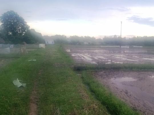 Cánh đồng nơi 4 người ở Thanh Hóa bị sét đánh thương vong