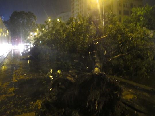 Cây bị quật đổ trên đường Láng Hạ, Đống Đa.