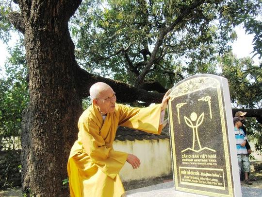 Hoà thượng Thích Đồng Tiến, trụ trì chùa Từ Quang bên bia và cây xoài Đá Trắng lớn tuổi nhất