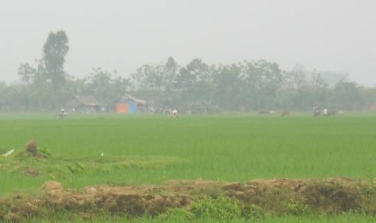 Cánh đồng Nương Mạ, xã Hùng Thành nơi phát hiện hai cháu Nguyên và Trỗi tử vong.