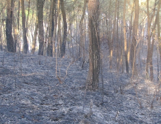 Hiện trường vụ cháy rừng tại huyện Đức Thọ ngày 11-9. Anh do kiểm lâm cung cấp.
