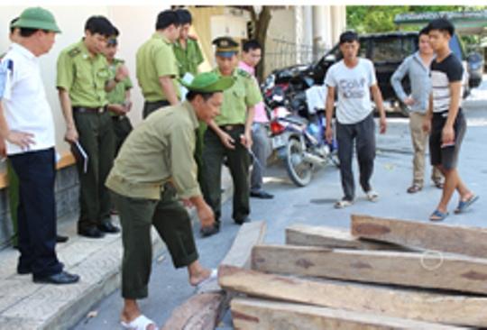 Số gỗ giáng hương (nhóm 1) được đưa về trụ sở Đội kiểm lâm cơ động số 1. Ảnh: Thái Thanh