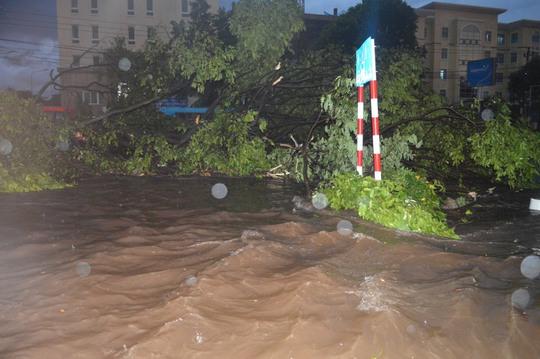 Cây xanh nặng hàng tấn trôi lềnh bềnh giữa phố