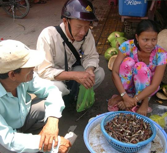 Sau khi bắt, bọ rầy sẽ được đưa về chợ Tịnh Biên bán sỉ và cả bán lẻ. Ảnh: Ngọc Trinh.