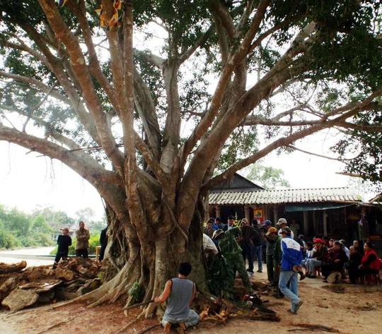 Các cơ quan chức năng tiến hành khai quật ở chùa Hoằng Phúc