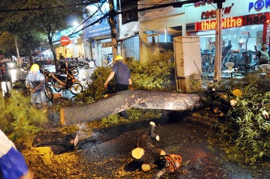 Cây me bật gốc ngã chắn ngang đường Nguyễn Thị Minh Khai