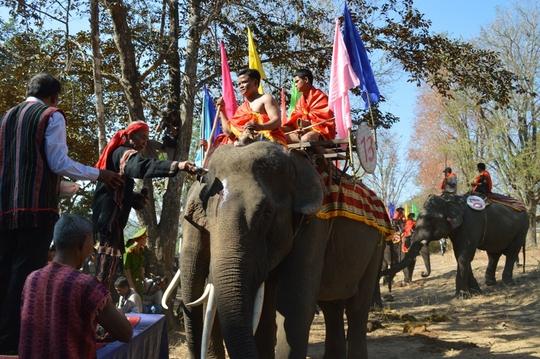 18 chú voi lần lượt được già làng Ây Bê tiến hành các nghi thức truyền thống như: Bôi tiết heo lên trán, rưới nước lên đầu, rải gạo…nhằm cầu mong sức khỏe cho voi