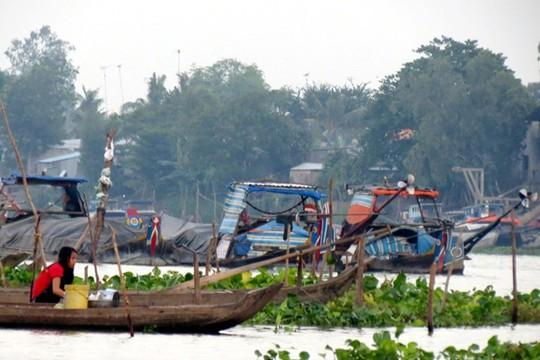 Nhiều ghe chài từ Campuchia về đậu trên sông Hậu chờ sang qua võ lãi.