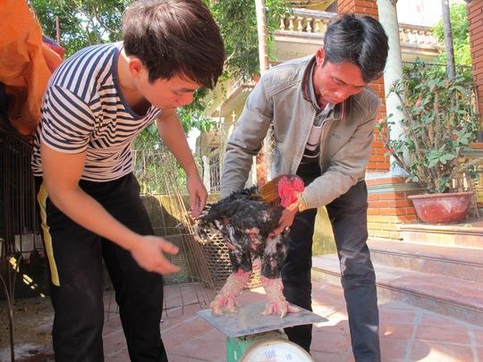 Giá gà thịt bán buôn ngay tại xã Đông Tảo là 300-400 ngàn đồng/kg, tuy nhiên với những con gà có dáng đẹp, chân to khủng thì có giá hàng chục triệu đồng.