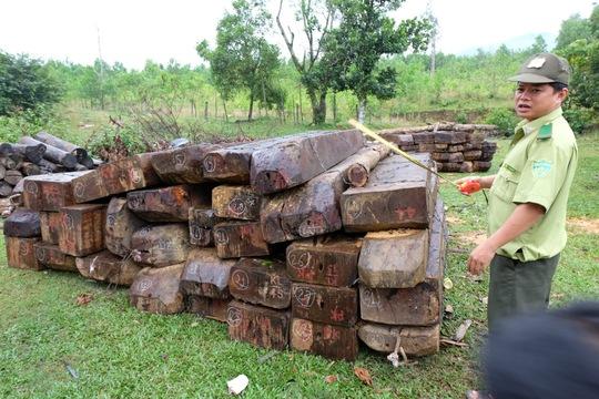 Một phần số gỗ phát hiện ngay trong rừng đặc dụng Bà Nà – Núi Chúa vừa được đưa ra bên ngoài. Ảnh: Công Thành
