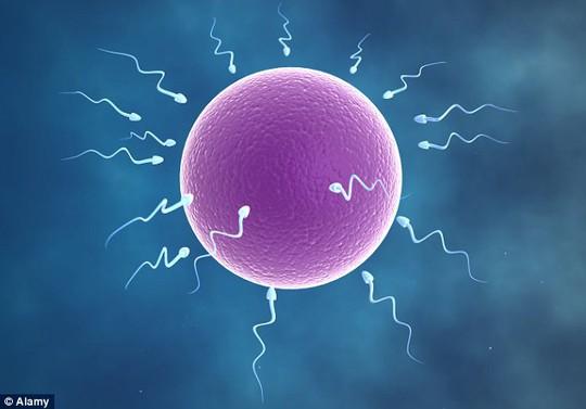 Thời gian ngày dài hơn đêm làm giảm chất lượng tinh trùng