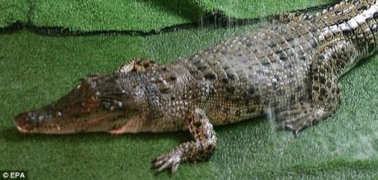 Nghi án máy bay rơi vì... cá sấu!