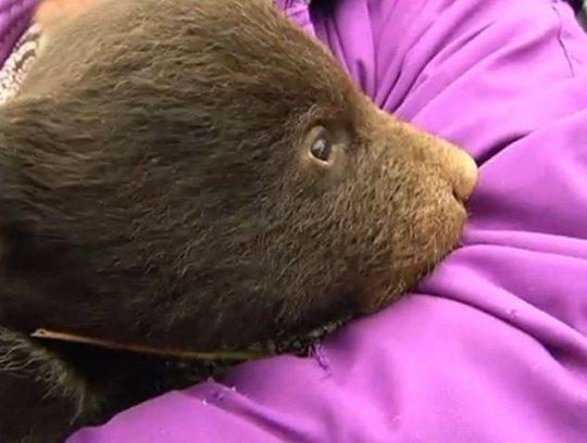 Mỗi gấu đực chỉ bán được với giá khoảng 555 USD. Ảnh: Daily Mail