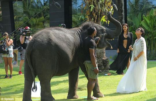 """Kim """"siêu vòng ba"""" bỏ chạy vì bị voi trêu"""