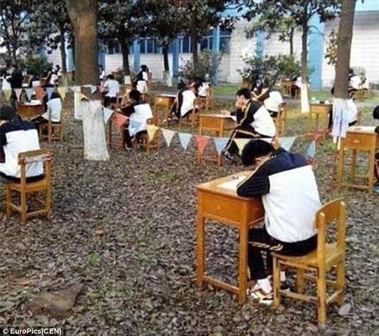 Trung Quốc: Sinh viên vào rừng làm bài thi