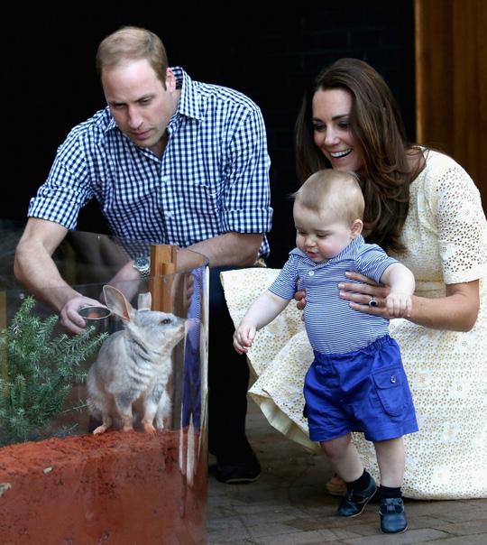 Gia đình hoàng tử bé đến sở thú Taronga tại Úc hồi tháng 4. Ảnh: Daily Mail