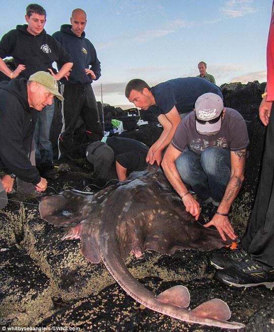 Daniel Bennett và con cá đuối khổng lồ