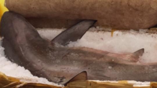 Con cá mập được ướp đá, chờ bán cho thương lái