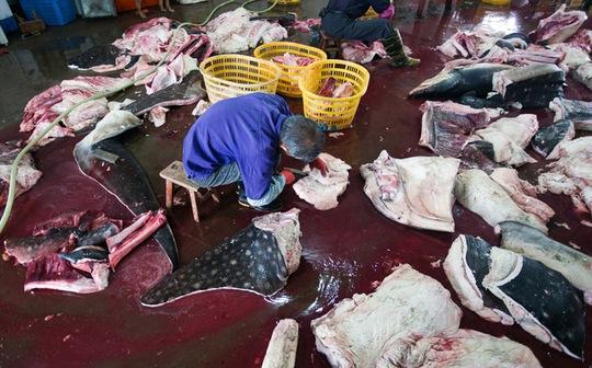 Chế biến cá mập ở Trung Quốc. Ảnh: WildLifeRisk
