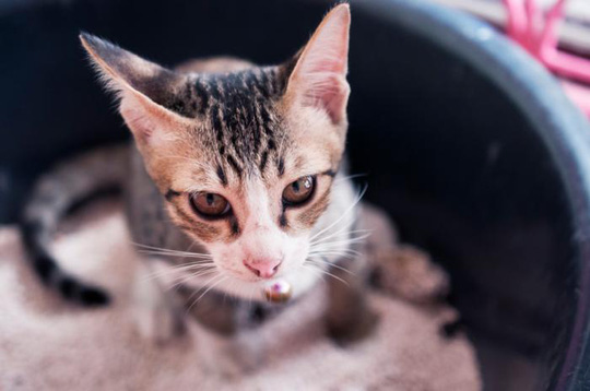 Phân mèo chữa được bệnh ung thư