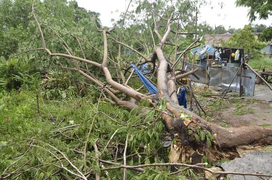 Cây xanh bật gốc trên đại lộ Nguyễn Văn Linh, huyện Bình Chánh, TP HCM vào sáng 12-6.