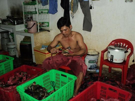 Cua biển Cà Mau có chất lượng tốt, thịt thơm ngon