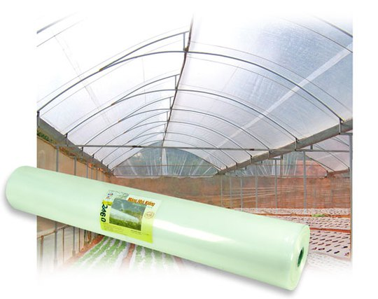 Màng nhà kính có tác dụng bảo vệ hoa màu, điều hòa nhiệt độ, giữ ẩm cho cây, cho năng suất cao