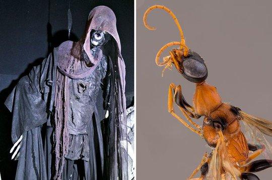 Ong hút hồn được họ đặt tên là Ampulex Dementor - phỏng theo tên nhân vật trong truyện Harry Potter.
