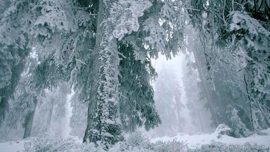 5 bí mật thú vị về cây thông Noel