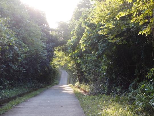 Mát lạnh con đường rừng xuyên đảo