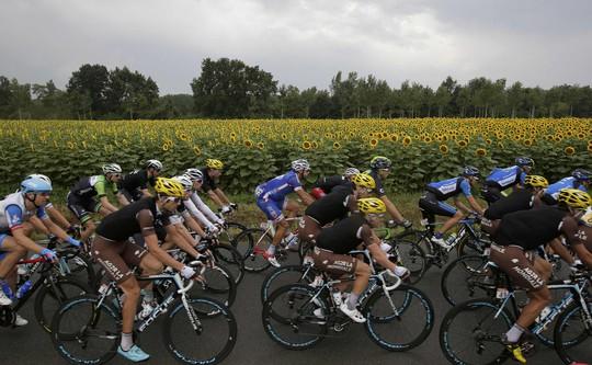 Đoàn đua băng qua những cánh đồng hoa hướng dương rực rỡ ở chặng 19 từ Maubourguet đi Bergerac