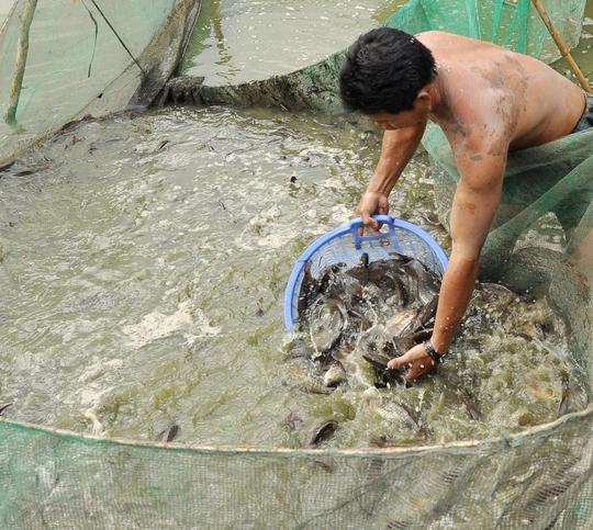 Đủ loại cá đồng nằm gọn trong lưới