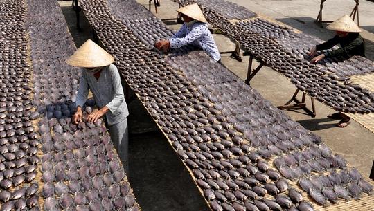 Cá bổi là sản phẩm tiêu biểu của mùa chụp đìa