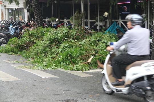 Cây bật gốc, gãy cành sau cơn mưa giông, xe máy gặp nạn