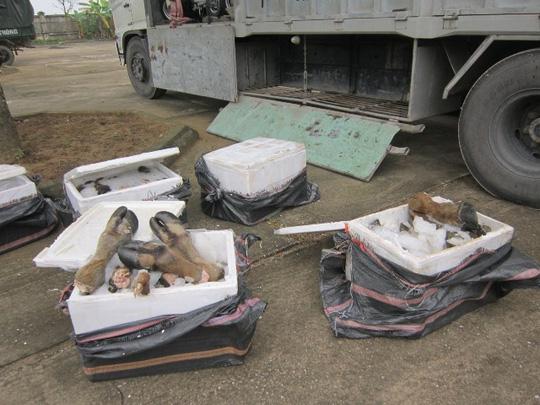 Số chân trâu, bò bẩn được lực lượng Công an phát hiện bắt giữ