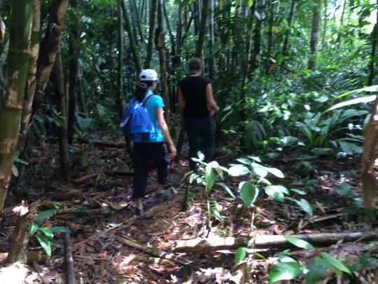 Để đến được nơi bông hoa khổng lồ nở, du khách phải lội bộ qua nhiều con dốc, suối và rừng rậm
