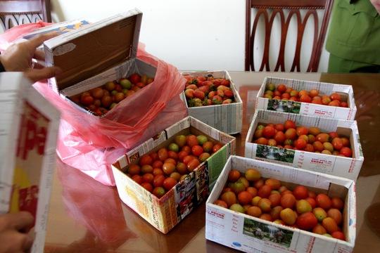 Người bán hàng rong dùng cà chua bi để lừa khách hàng