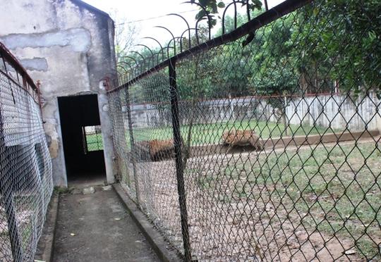 Đột nhập trại nuôi hổ lớn nhất ở Thanh Hóa - Ảnh 5.