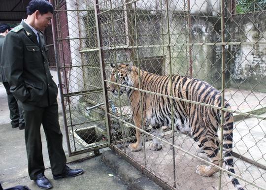 Đột nhập trại nuôi hổ lớn nhất ở Thanh Hóa - Ảnh 11.