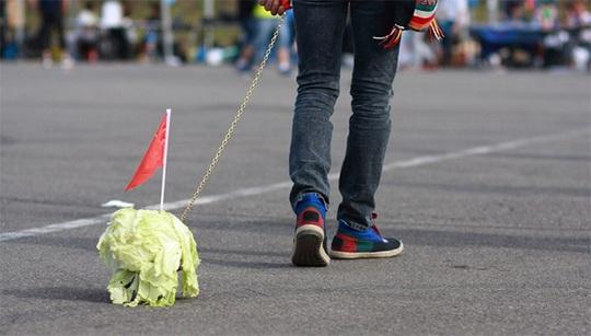 cabbage-walk.jpg