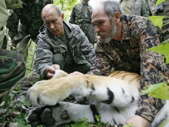 Vladimir Putin has often shown concern for Russias big cats. (Photo: AP)