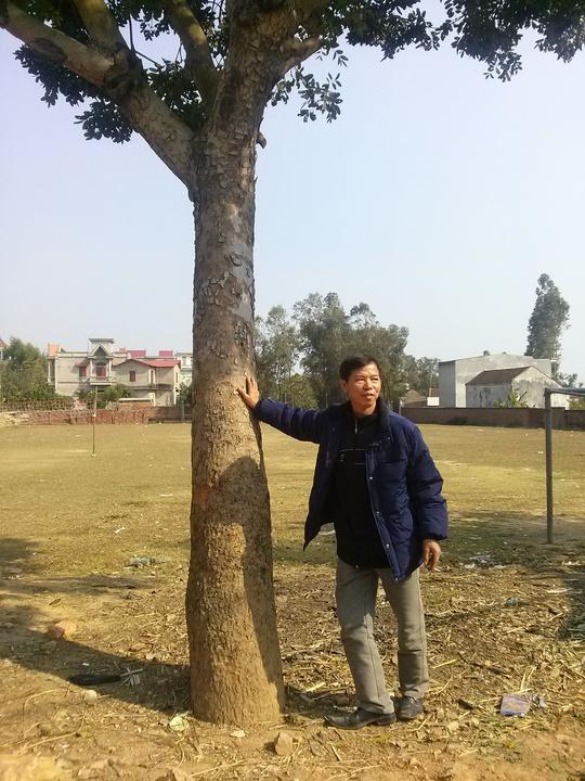 Ông Chấn đứng bên chiếc cây mà vợ ông trồng trong lần đi thăm chồng trong tù cách đây 10 năm.  Cái cây này như một sự chứng giám tình cảm và niềm tin sắt đá của bà Chiến với chồng mình.