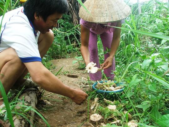 Vợ chồng ông La Mô Thăng vừa tìm được một khoang nấm ở bìa rừng sau nhà