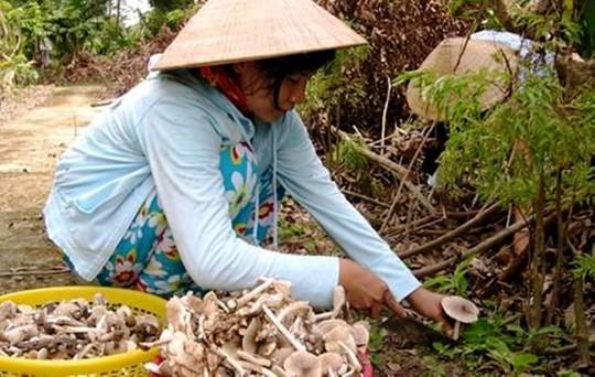 Mẹ con chị Trần Thị Thu Thảo mừng rỡ khi tìm được một khoang nấm ở bìa rừng xã Suối Bạc, huyện Sơn Hòa. Ảnh: Trần Lê Kha