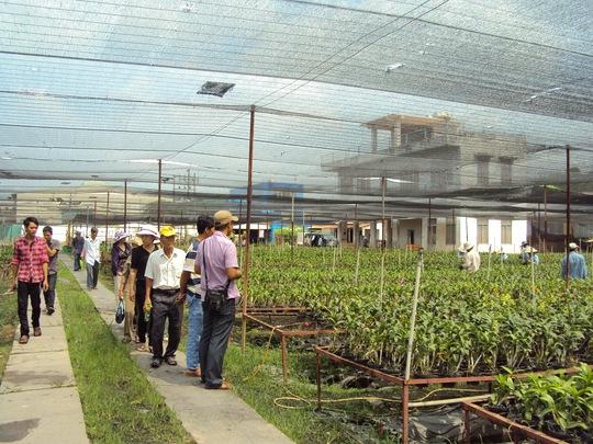 Lao động nông thôn tại TP HCM học nghề trồng hoa lan tại huyện Bình Chánh ảnh: HỒNG NHUNG