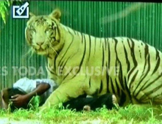 Nam sinh bị hổ trắng vồ chết trong vườn thú