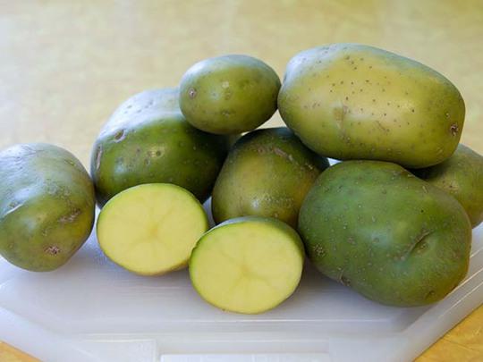 Những quả khoai tây có màu xanh như thế này chứa nhiều solanine