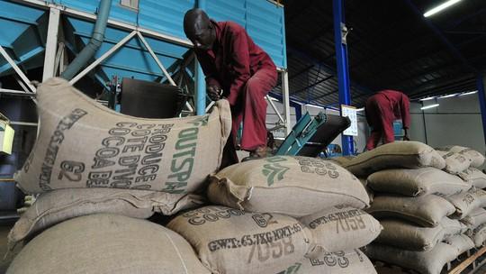 Nhân viên của một công ty xuất khẩu ca cao đang chất những bao ca cao lên kệ trong một nhà máy bao bì tại Abidjan, Bờ Biển Ngà. Bờ Biển Ngà là một trong những nhà sản xuất chính của thế giới ca cao.